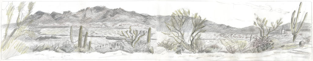 Panorama view from Desert Lab, by Meredith Milstead