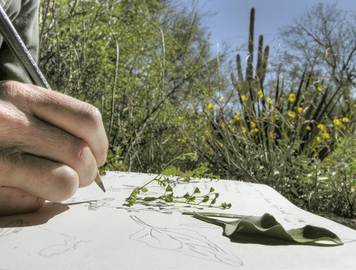 Meredith Drawing