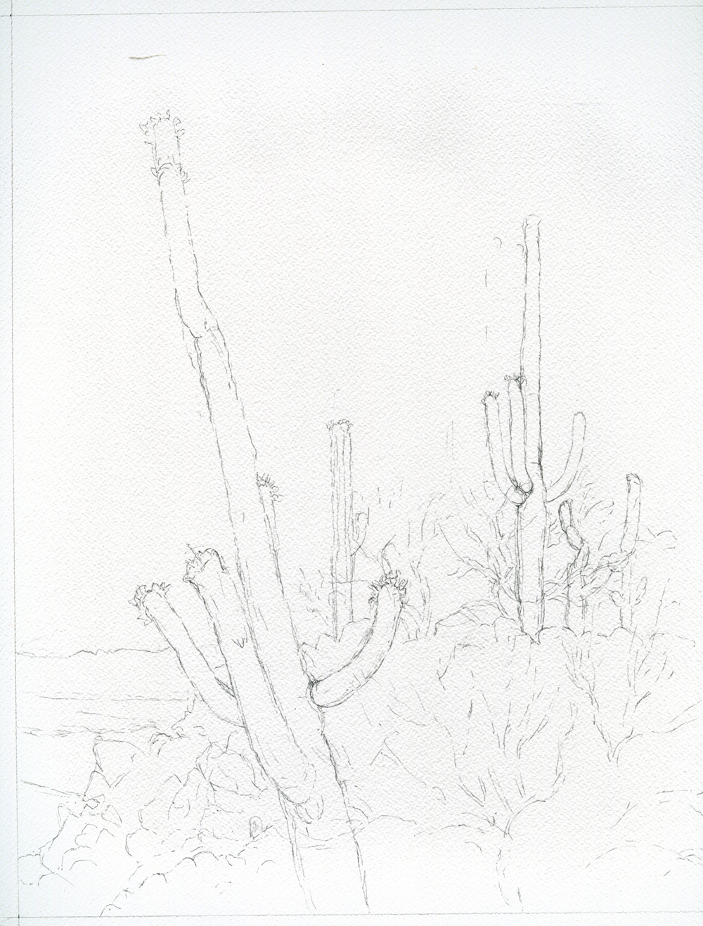 Unfinished Sketch, Saguaros