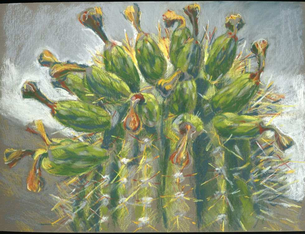 Saguaro fruit by Meridith Milstead, pastel