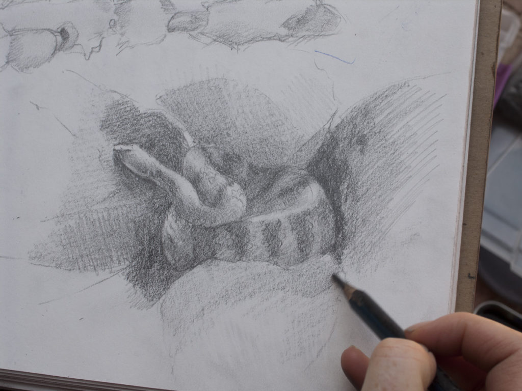 Meredith Milstead's rattler drawing