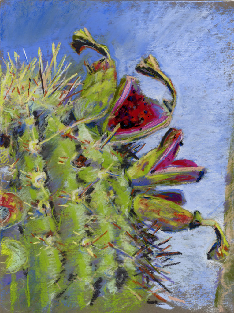 Saguaro Fruit study in pastel, by Meredith Milstead
