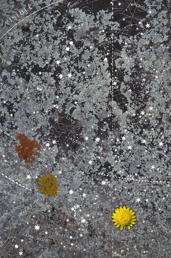 Lichens, tiny sunflower, Stars.