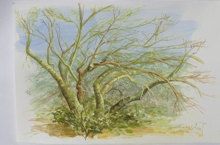 Cassein painting by Bill Singleton