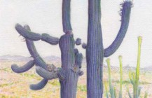 Sonoran Arts Network Reviews Tumamoc Book