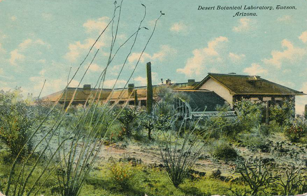 Desert Botanical Lab on Tumamoc Hill 1911