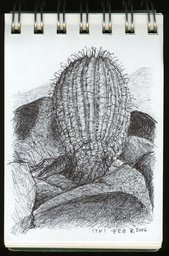 """Barrel Cactus, Tumamoc Hill"", ball point pen drawing by Barbra Terkanian"