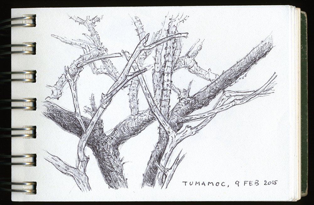 """Branches, Tumamoc"", ball point pen drawing by Barbra Terkanian"