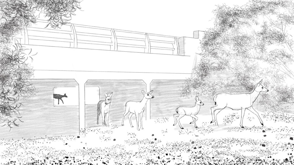 mule deer going through the viaduct.