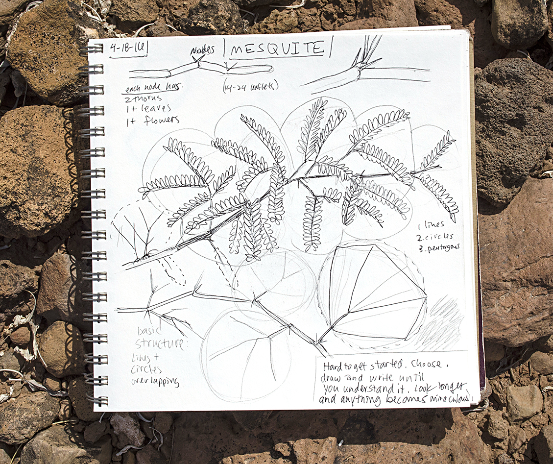 Paul Mirocha's sketchbook: learning to draw a mesquite.