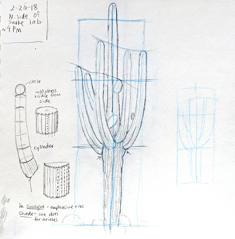 saguaro drawing by Paul Mirocha