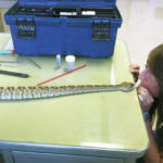 Snake CPR: helping the snake breathe out and relaese the anesthetic.