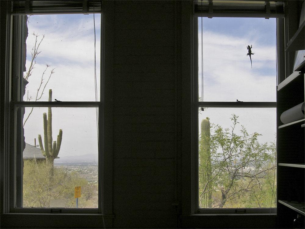 spiny lizard on window