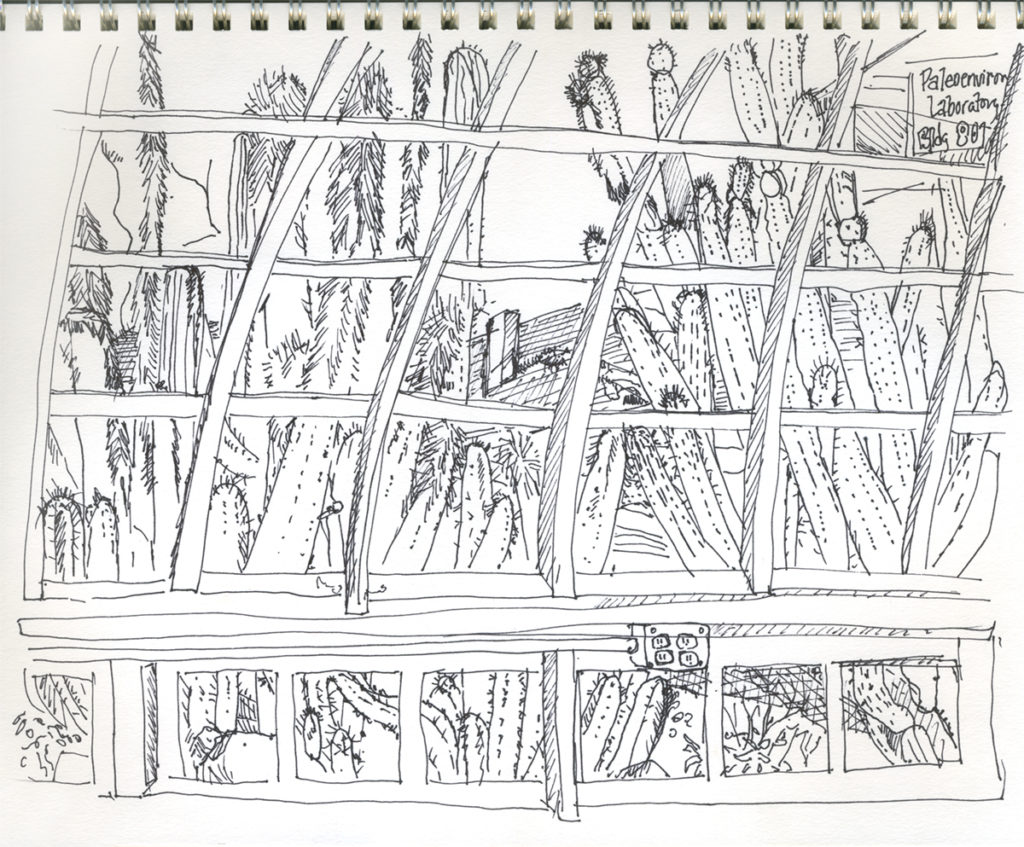 Drawing in Desert Lab greenhouse, by Maria Arvayo