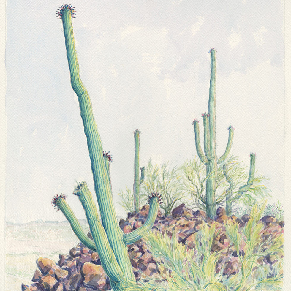 Saguaro Landscape, watercolor by Barbara Terkanian