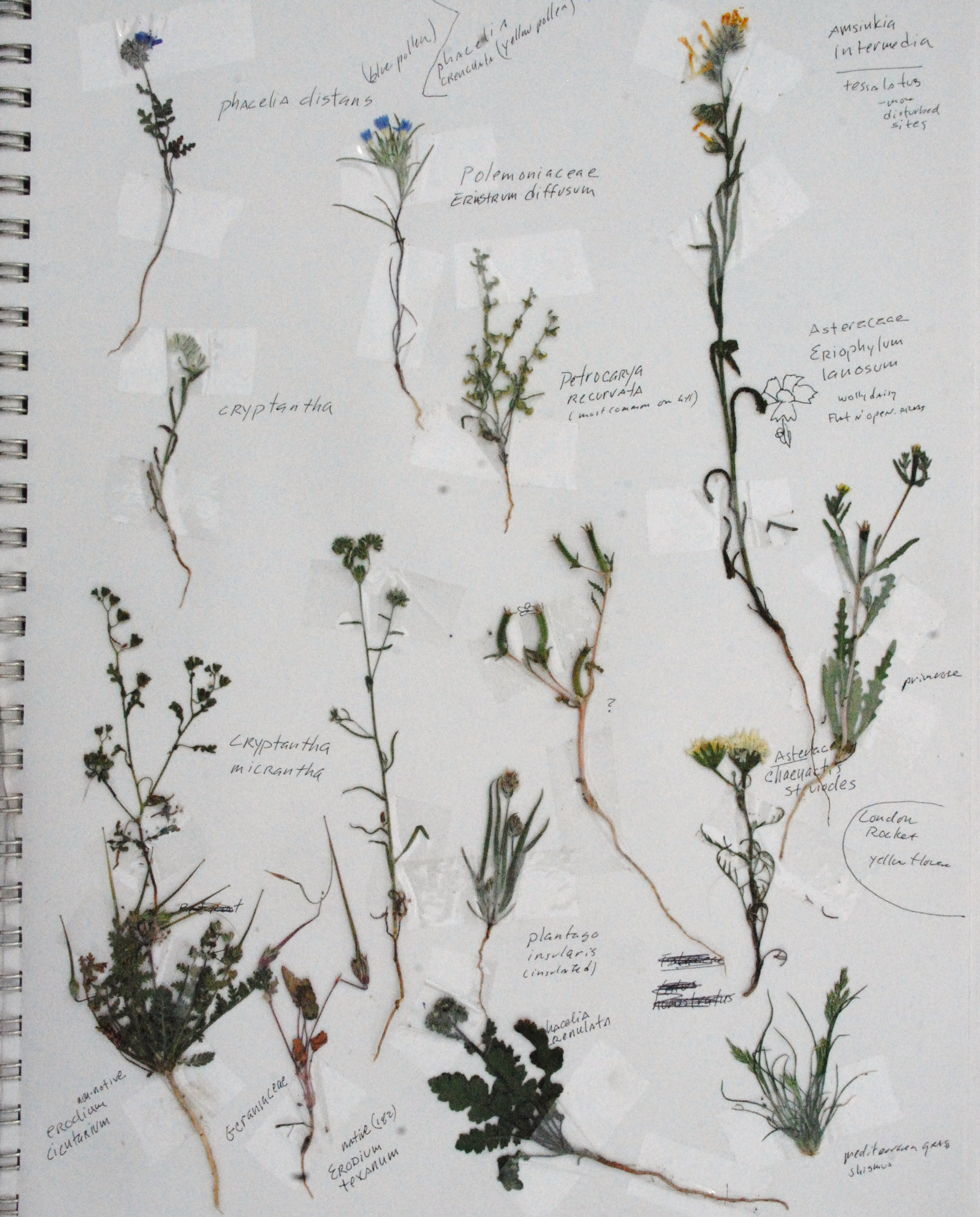 plants pasted into sketchbook