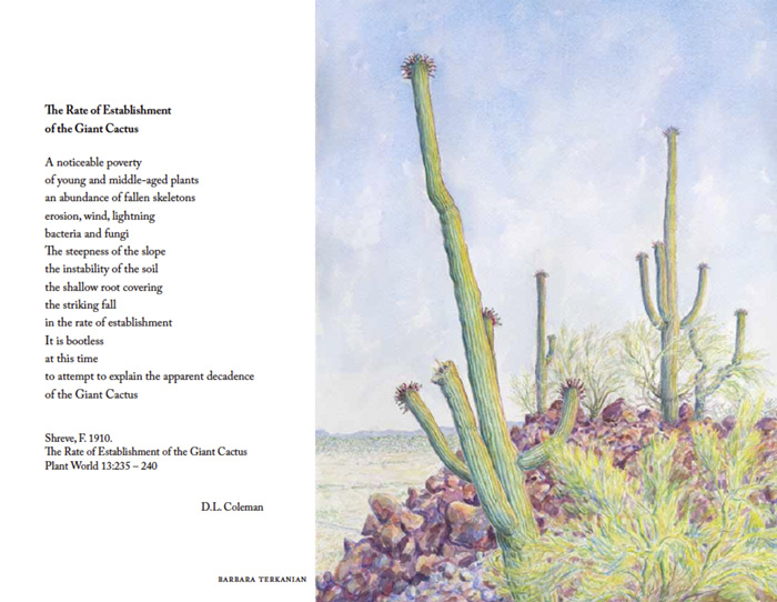 saguaro watercolor by Barbara Terkanian