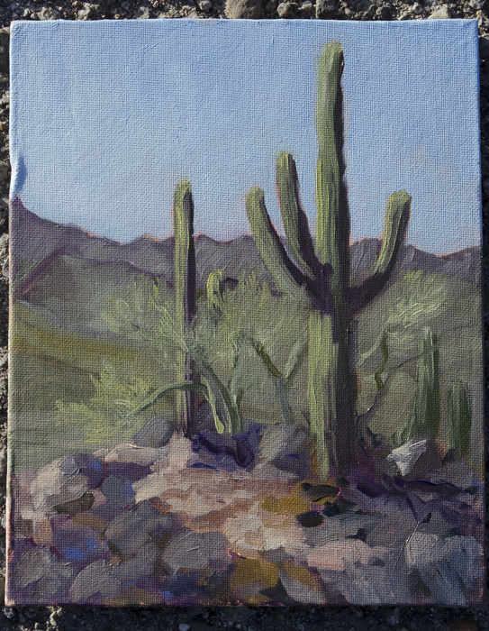 oil painting of saguaros on west side of Desert Lab by Gay Scheibl