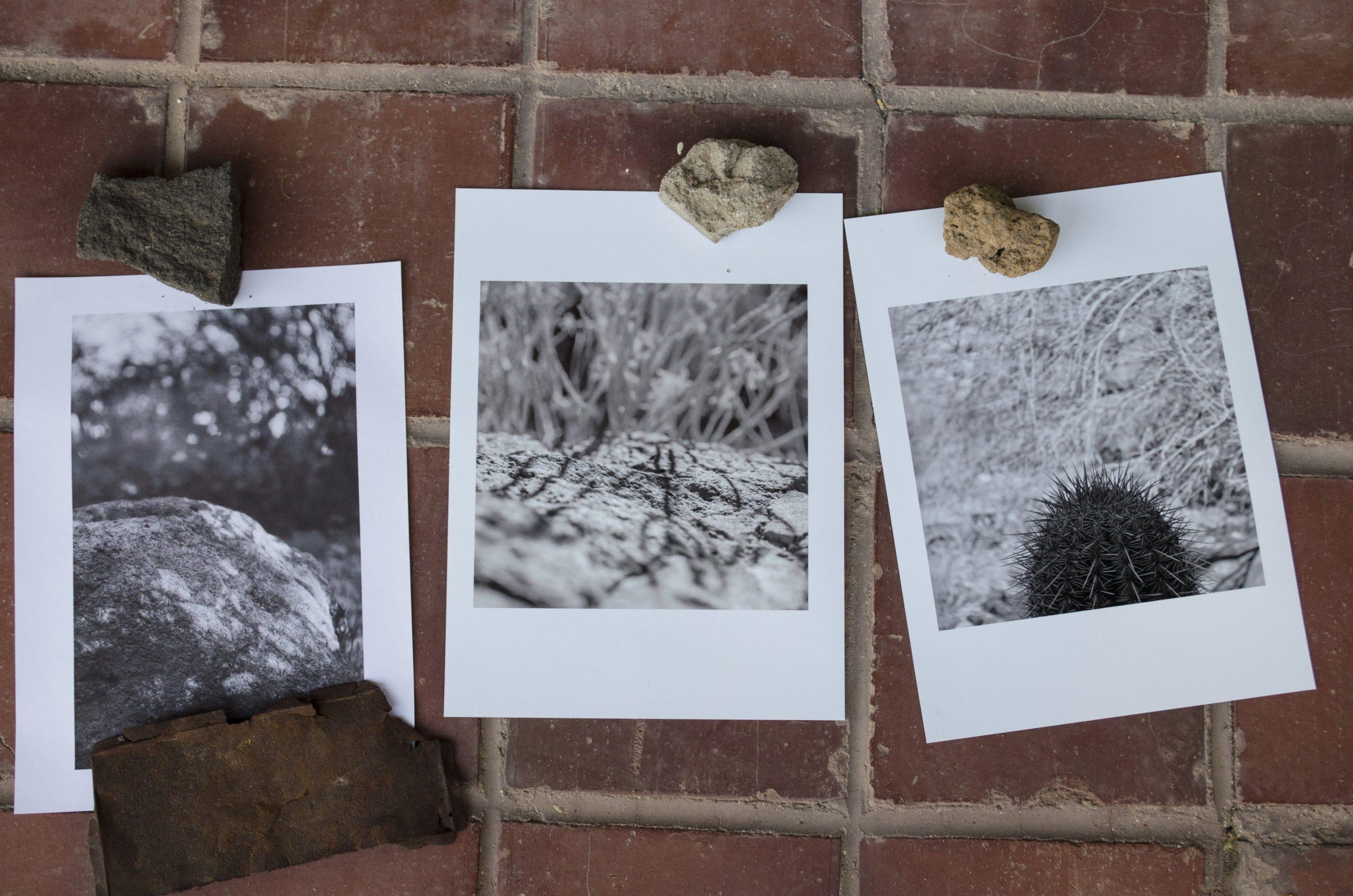Photographs, Plot #10 by Paul Mirocha