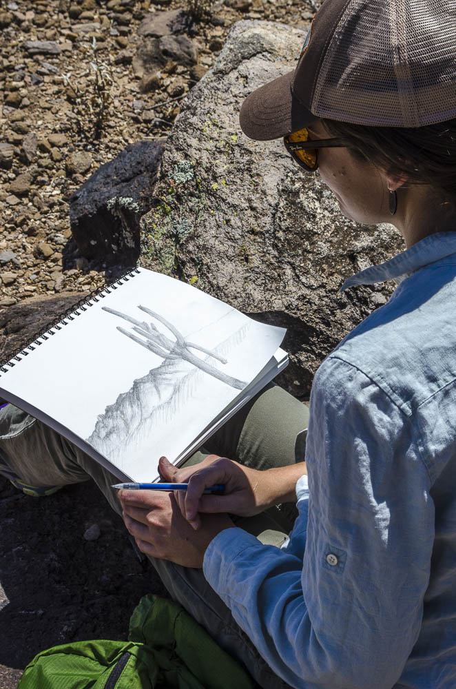Saguaro Drawing in progress by Maria Johnson on Tumamoc Hill