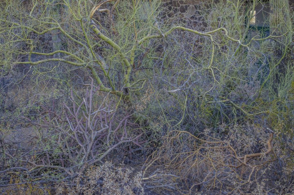 Sonoran Desert Garde Desert Lab on Tumamoc Hill, photo by Paul Mirocha
