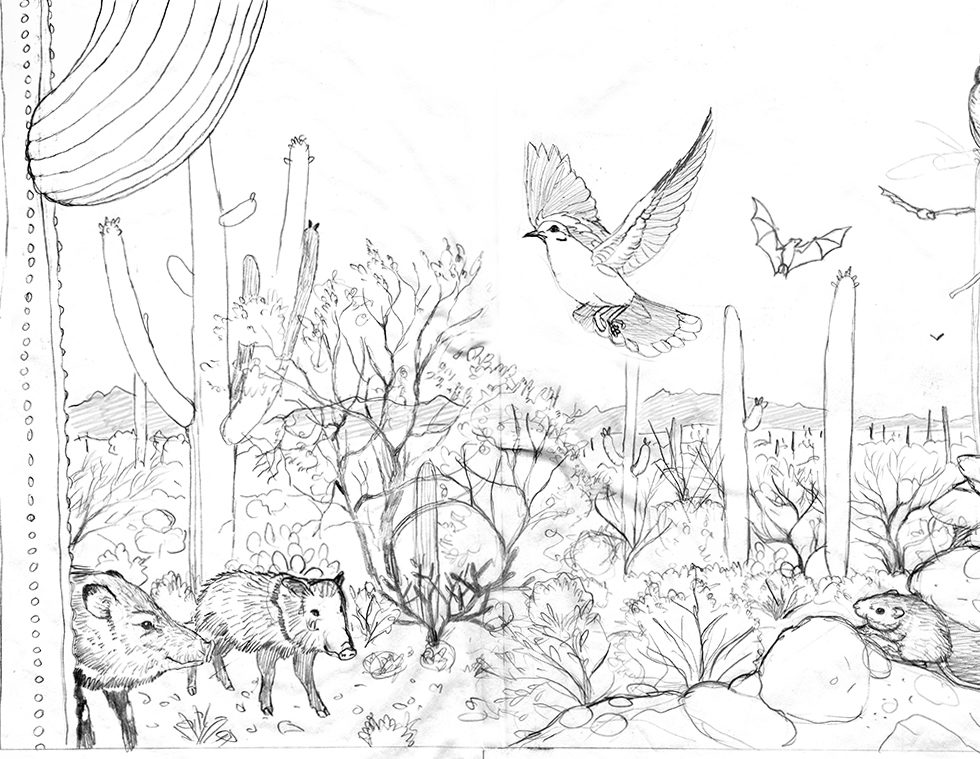 pencil sketch for a Sonoran Desert Panorama, by Paul Mirocha