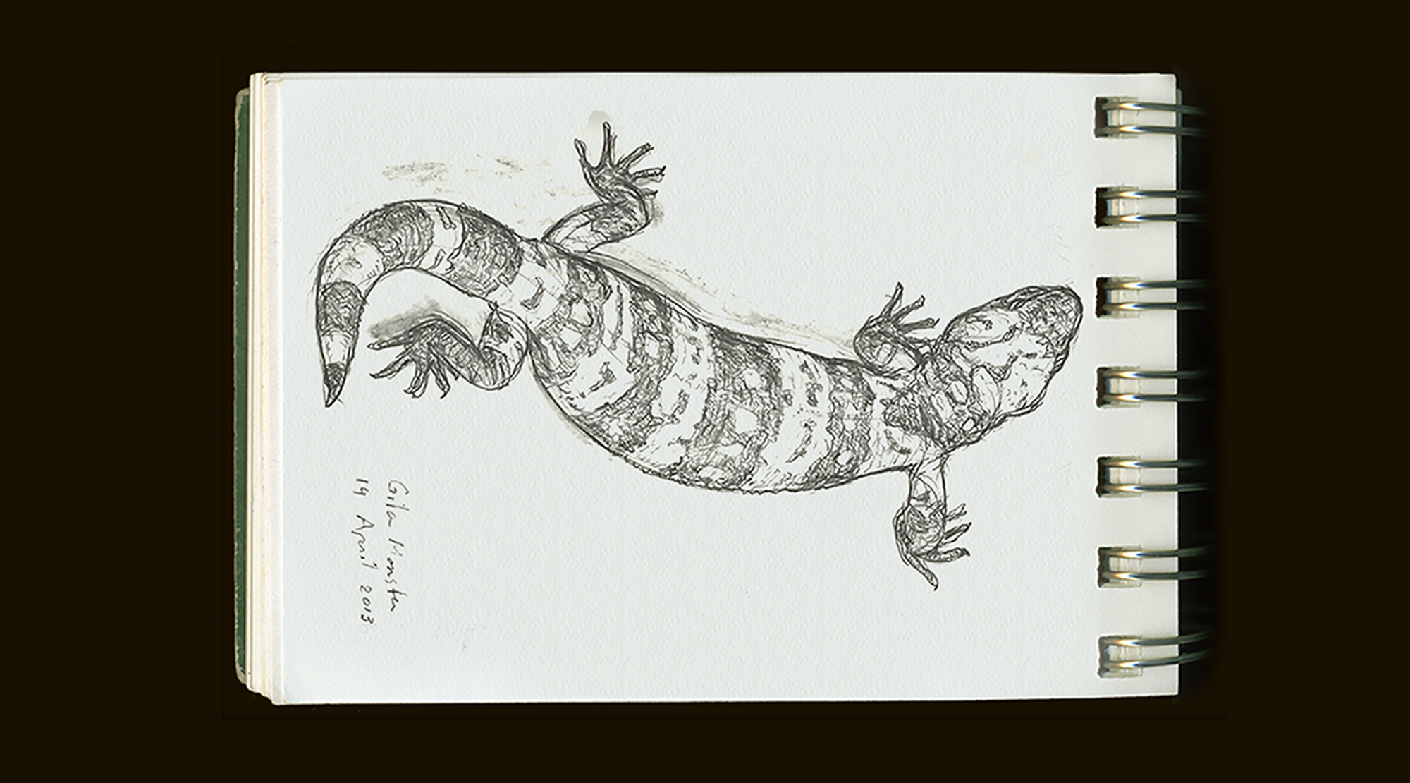 gila monster sketch by Barbara Terkanian