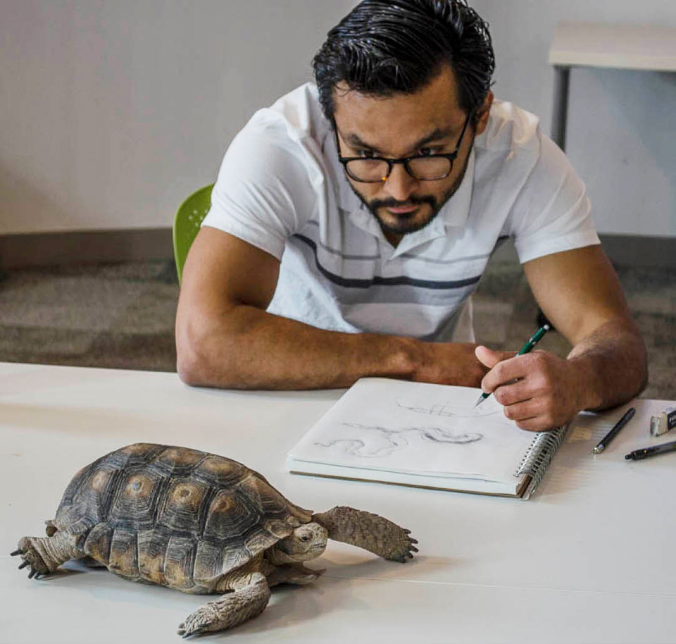 Student in the Tumamoc Art & Science OCurse draws a live desert tortoise