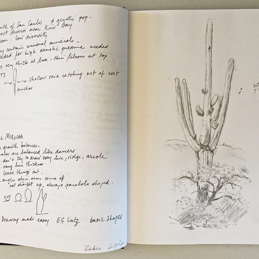 Student's field sketch from Saguaro class