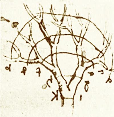 leonardo's tree branching sketch