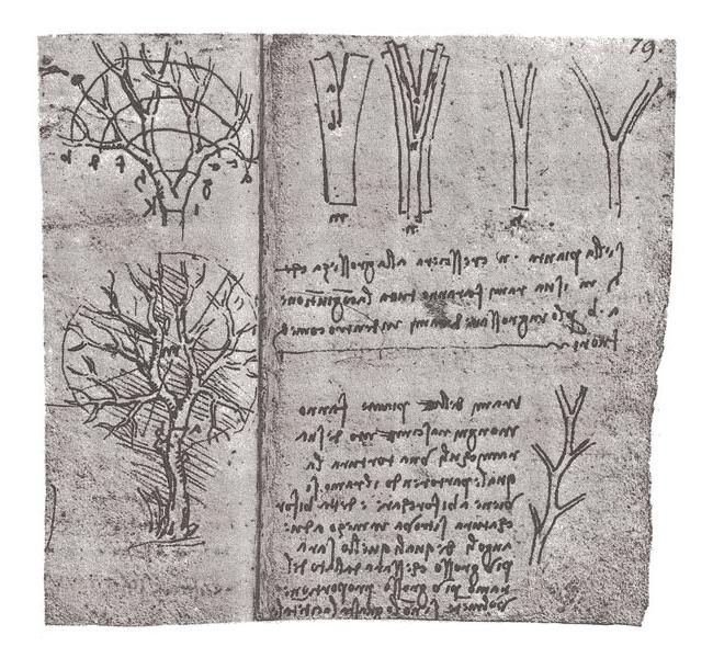 leonardo's note book on tree branching