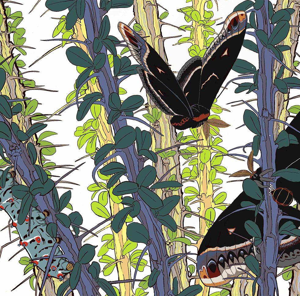 moths on ocotillo